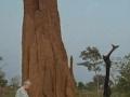 20080531_1709174968_termit